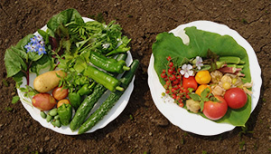 Vegetables_M3